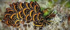 Discover sea creatures