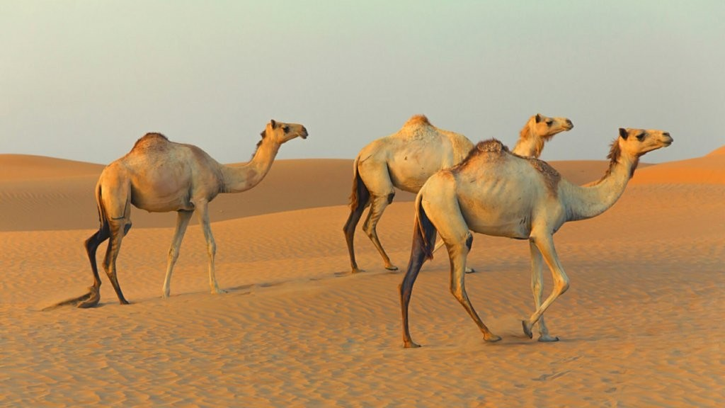 Why More Startups Should Aim to Be 'Camels' Than 'Unicorns'