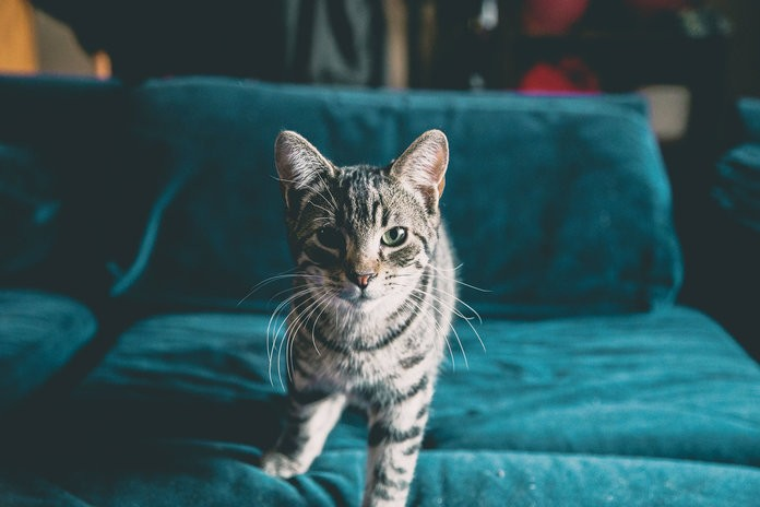 Cats Mirror the Personalities of Their Owners, According to New Research