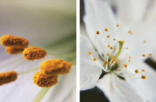 8 Tips for Using an iPhone Macro Lens