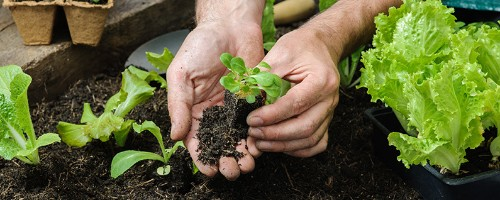 5 Essential Apps for Growing a Garden