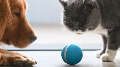 Wicked Ball Review: Autonomous Pet Toy Keeps Dogs & Cats Entertained