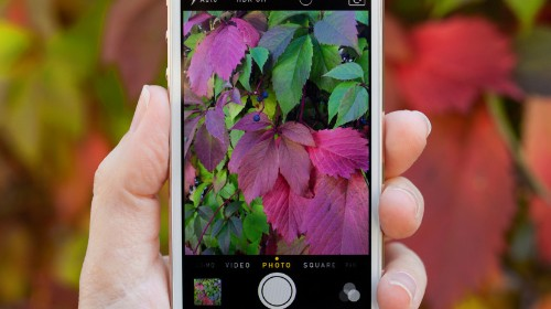 How to Crop Pictures on iPhone (Without an Editing App)