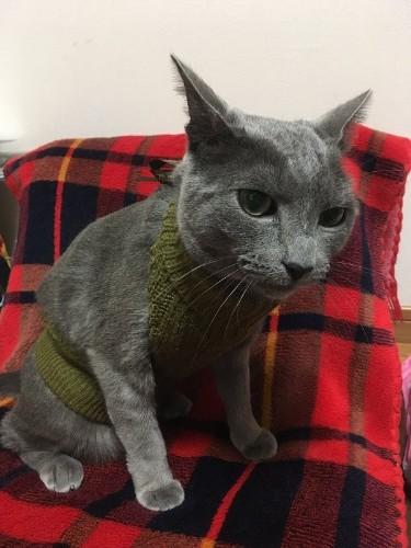 「童貞を殺すセーター」を着用した猫あらわる 童貞を殺す異種格闘技戦、ここに開幕
