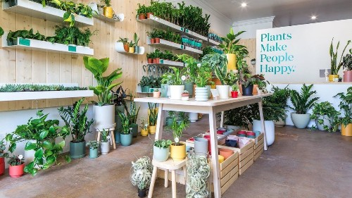 This new houseplant store in West Hollywood is part retail, part therapy