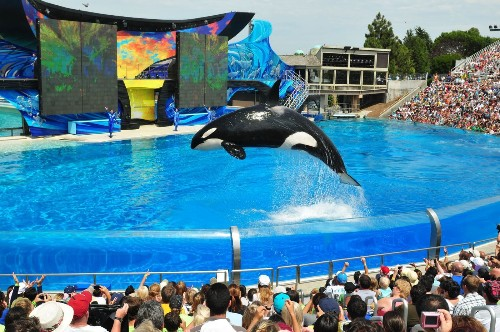 SeaWorld gets extension to sue over orca enclosure project
