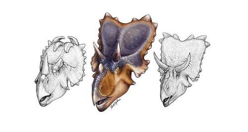 Mercuriceratops: With bony wings on its skull, dinosaur looked fly