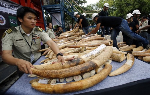 Gov. Brown closes loophole in ban on ivory sales in California