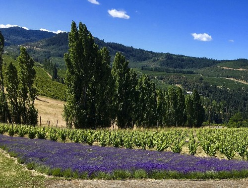 The complex and gorgeous Columbia Gorge produces a wide range of beautiful wines