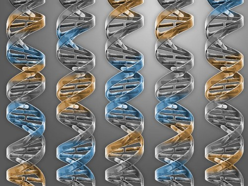 Scientists synthesize the shortest known genome necessary for life