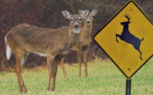 Roadkill counter is an app for that splat