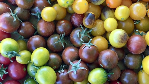 5 secrets to growing big, fat, juicy tomatoes