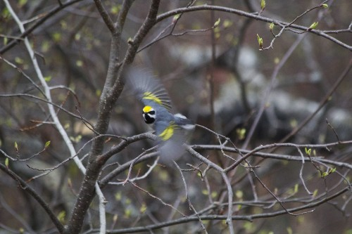 Nature's own tornado detector saves migrating birds, study finds