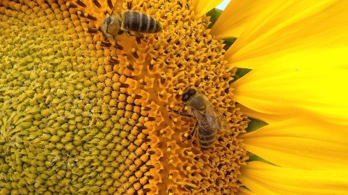6 easy ways you can help save the bees