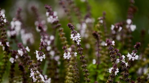 No green thumb needed: 6 drought-tolerant herbs that are almost impossible to kill
