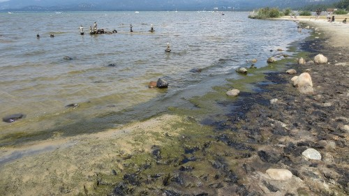 Researchers ask public for old photos of Lake Tahoe algae - Los Angeles Times