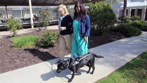 Burbank family raises guide dog for area nonprofit