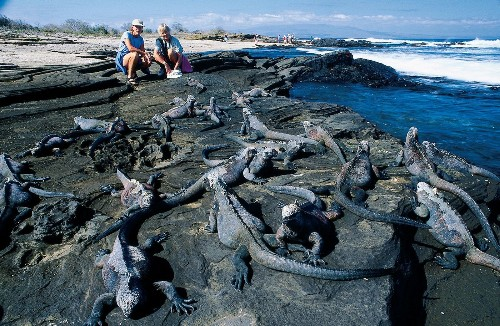 Walk on the wild side on a discounted yacht tour of the Galapagos Islands
