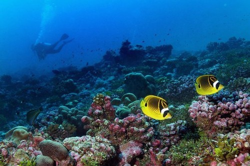 Pacific Ocean warming faster than it has in 10,000 years, study finds - Los Angeles Times