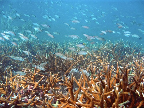Florida coral restoration may take $250 million, and 400 years