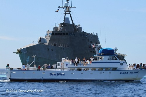Navy ship nearly crosses paths with migrating gray whales