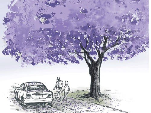 It's jacaranda season: When purple reigns