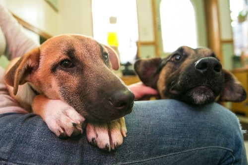 How to keep your pets safe in an earthquake - Los Angeles Times