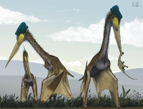 Toothless 'dragon' pterosaurs once ruled skies worldwide, study says