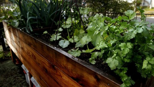 27 tips, tricks and hacks for creating your very first vegetable garden - Los Angeles Times