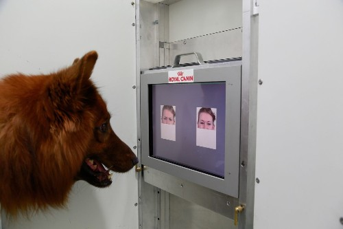 Happy face or angry face? A dog can tell the difference, study finds - Los Angeles Times