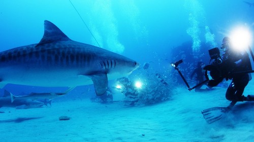 Review: 'Sharkwater Extinction,' a fitting tribute to Rob Stewart, its late filmmaker