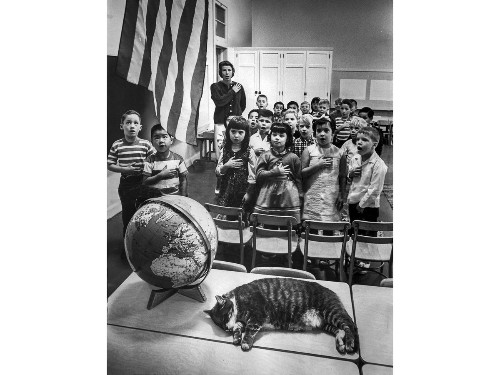 From the Archives: Beloved school mascot was a cat named 'Room 8' - Los Angeles Times
