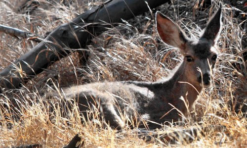 State's drought having pronounced effect on wildlife
