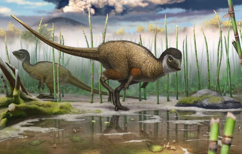 Ancestors of birds were not the only dinosaurs with feathers