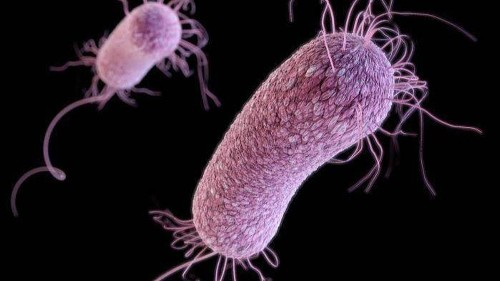 Recent superbug cases linked to weight-loss surgeries in Tijuana prompt fresh warning