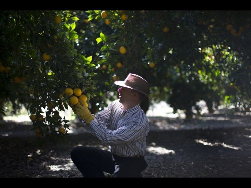 How Orange County's namesake was squeezed out—and is being squeezed in