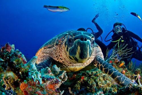 Scuba diving in the Yucatán Peninsula's spectacular cenotes, Caribbean