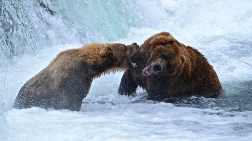 National park tips: Come here to watch bears fishing