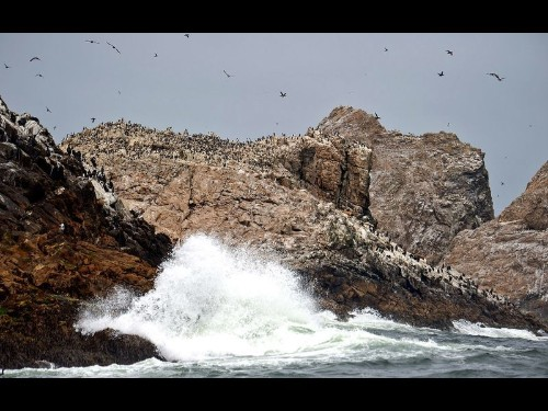 The U.S. wants to dump 1.5 tons of rat poison pellets on the Farallon Islands. Biologists say it's for the bes