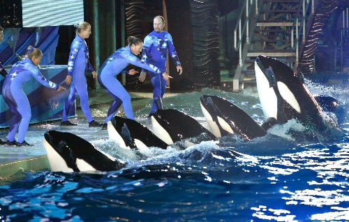 Federal bill calls for new rules for killer whales, others at SeaWorld