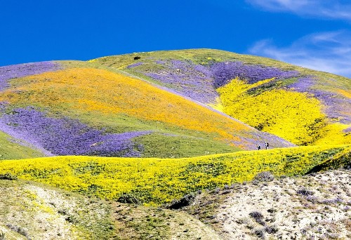 What you need to know about the 'super bloom' at Carrizo Plain National Monument