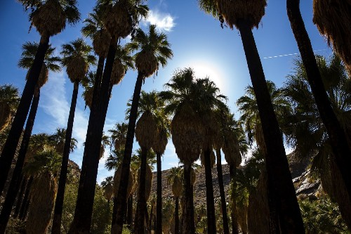 No better time than fall or winter for hiking in and around Palm Springs - Los Angeles Times