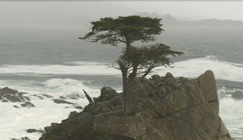The Lone Cypress on the Monterey Peninsula loses a limb during brutal storm