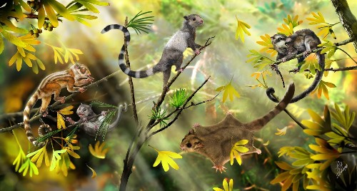 Scientists discover 3 new mammals that lived alongside dinosaurs - Los Angeles Times
