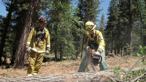 Trees are dying in the Sierra but the forests aren't - Los Angeles Times