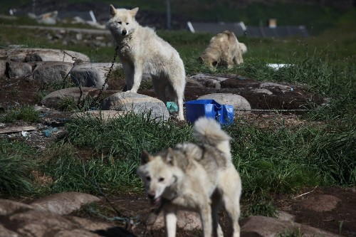 Dogs split from the wolf pack earlier than thought, DNA analysis suggests