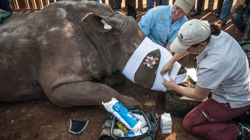 Some of the people who are supposed to be saving rhinos are helping them die out