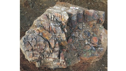 Growing pains: The oldest trees on Earth ripped themselves apart, fossils show