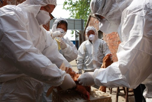 H7N9 bird flu has the makings of a pandemic virus, scientists warn