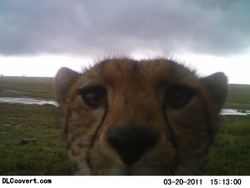 This is what happens when you scatter 225 cameras around the Serengeti